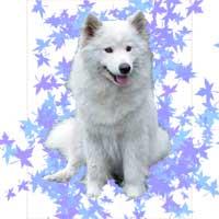 Forum Forum o psach i innych zwierrzakach Strona Główna