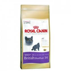 BRITISH SHORTHAIR 34 - 0,4 kg - koty brytyjskie krótkowłose
