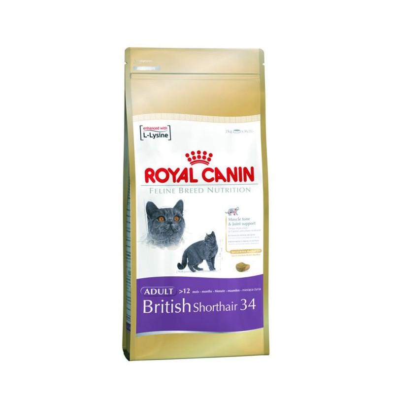 british shorthair 34 2 kg koty brytyjskie kr tkow ose. Black Bedroom Furniture Sets. Home Design Ideas