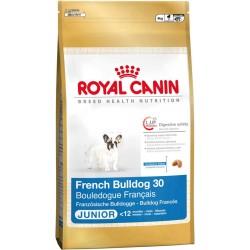 French Bulldog Junior 30 - 4kg - szczenięta rasy Buldog Francusk