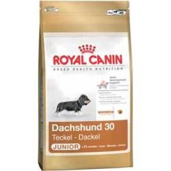 DACHSHUND JUNIOR 1,5kg, szczenięta jamniki, karma Royal Canin