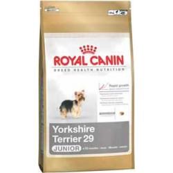 YORKSHIRE TERRIER JUNIOR 1,5kg, karma Royal Canin