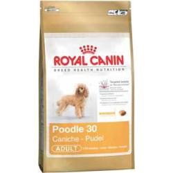 POODLE 1,5kg, dla psów pudli dorosłych, karma Royal Canin