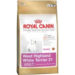 West Highland White Terrier 1,5kg, psy dorosłe, karma Royal Cani