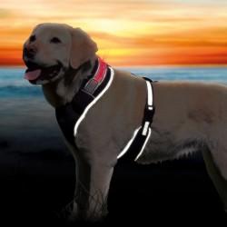 """Szelki dla psa """" FLESH"""" Trixie -  L-XL ze światłem pulsacyjnym i ciągłym"""
