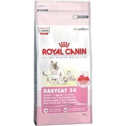 BABYCAT 34 - 4 kg - małe kocięta