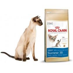 SIAMESE 38 - 2 kg - koty syjamskie