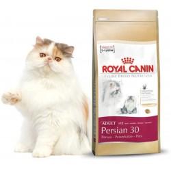 PERSIAN 30 - 4 kg - koty perskie