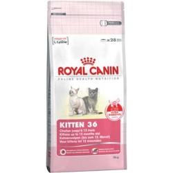 KITTEN 36 - 10 kg - kocięta