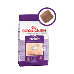GIANT ADULT - 15 kg - psy ras olbrzymich, dorosłe